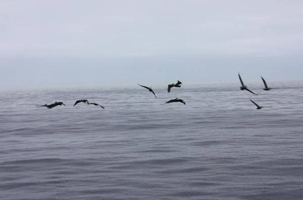 Photograph - Sea Birds by Daniel Schubarth