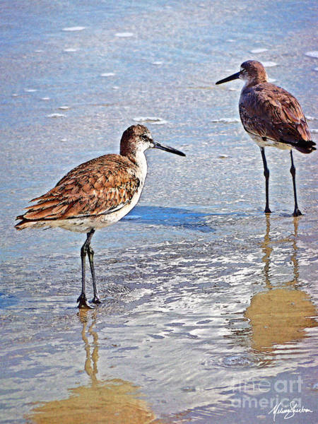 Photograph - Sea Birds No.4 by Melissa Sherbon