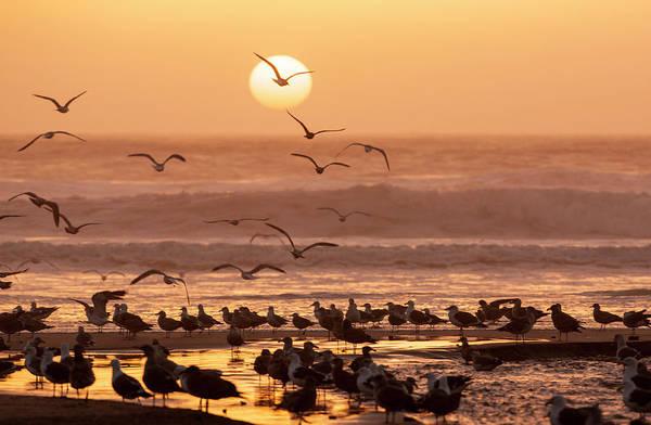Wall Art - Photograph - Sea Birds On Beach by Tom Norring