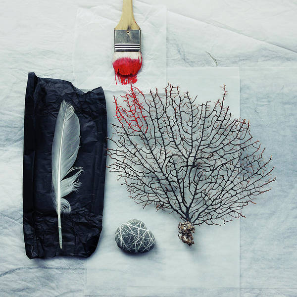 Tissue Paper Photograph - Sea Fan, Pebble And Paintbrush With Red by Fiona Crawford Watson