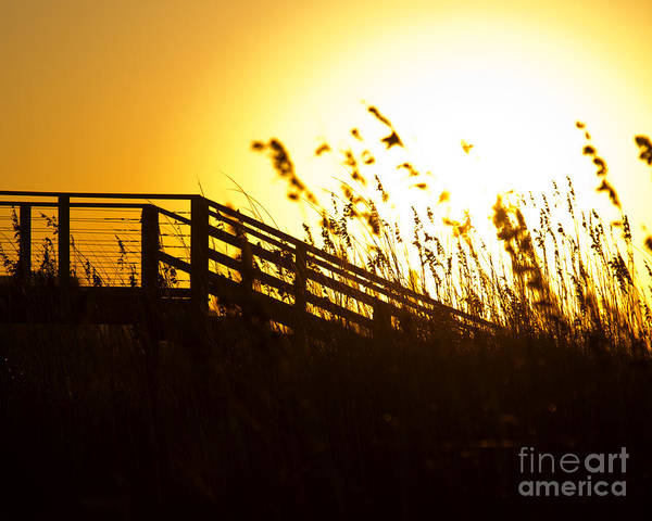 Wall Art - Photograph - Sea Grass And Broadwalk In The Morning Light Of Southport North  by ELITE IMAGE photography By Chad McDermott