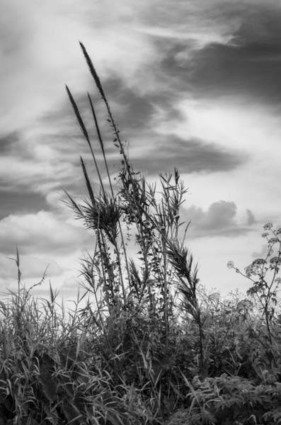 Photograph - Sea Grass - Bw by Carolyn Marshall