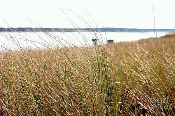 Photograph - Sea Grass by Carol Groenen