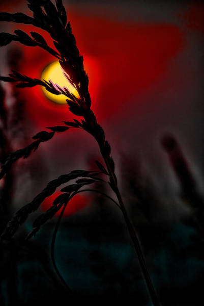 Digital Art - Sea Grass In A Red Sky Morning by Michael Thomas
