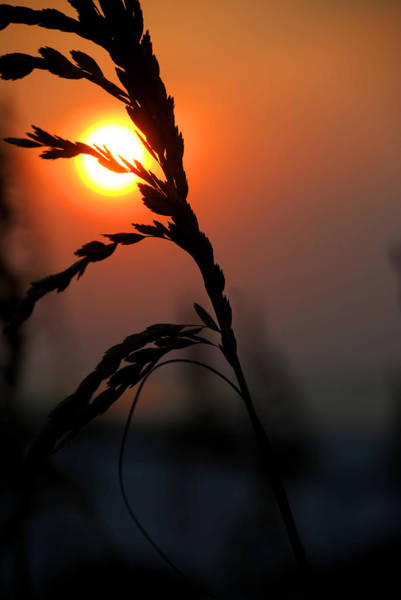 Digital Art - Sea Grass In The Sun by Michael Thomas