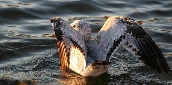 Wall Art - Photograph - Sea Gull Beauty by Valia Bradshaw