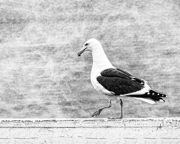 Sea Gull On Wharf Patrol Art Print