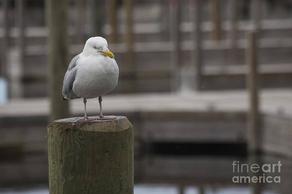 Two Birds Photograph - Sea Gull by Twenty Two North Photography