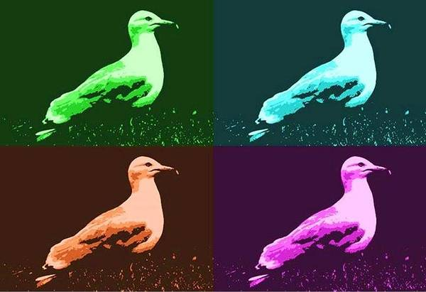 Photograph - Sea Gulls 4  by Al Fritz
