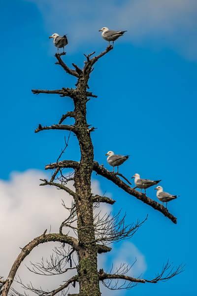 Wall Art - Photograph - Sea Gulls Hangin Out by Paul Freidlund