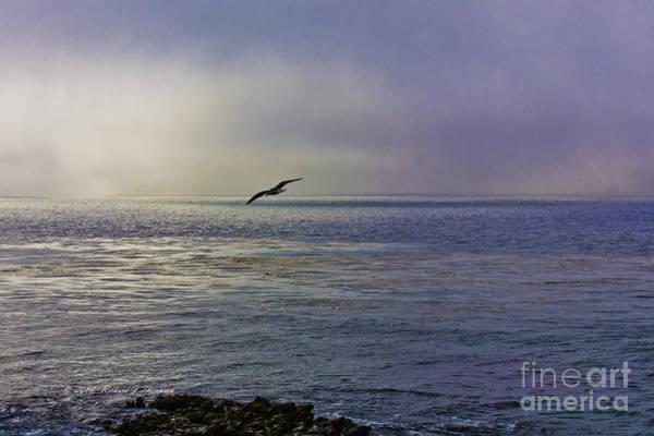 Photograph - Sea Gull's Twilight Flight by Richard J Thompson