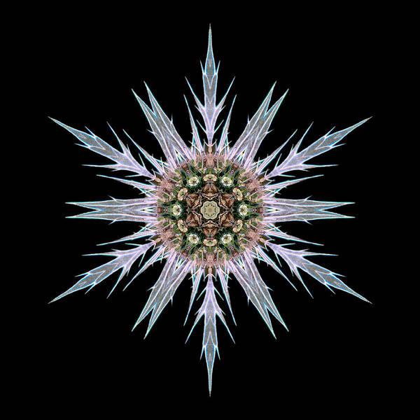 Photograph - Sea Holly I Flower Mandala by David J Bookbinder