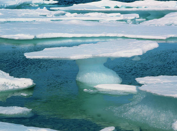 Ice Floe Photograph - Sea Ice by Simon Fraser/science Photo Library