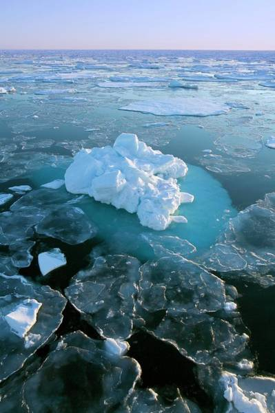 Ice Floe Photograph - Sea Ice by Steve Allen/science Photo Library