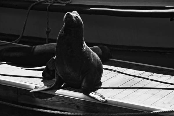Photograph - Sea Lion At Pier 39 by Aidan Moran