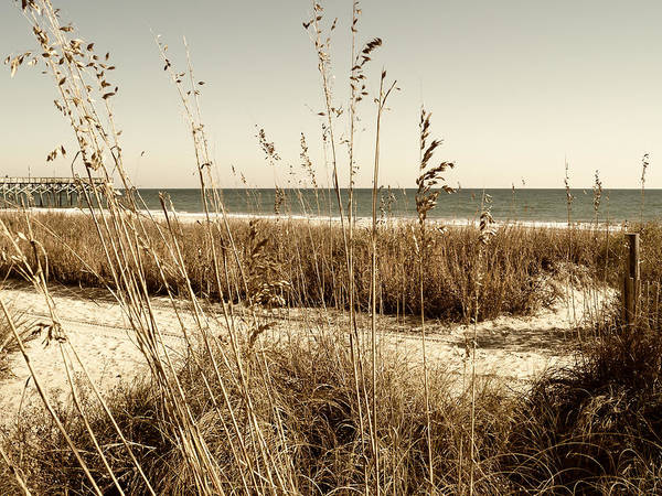 Photograph - Sea Oats Along The Strand by MM Anderson
