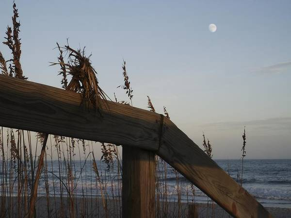Photograph - Sea Oats And Wooden Railing by MM Anderson
