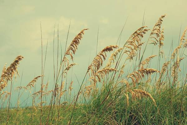 Photograph - Sea Oats by Beverly Stapleton