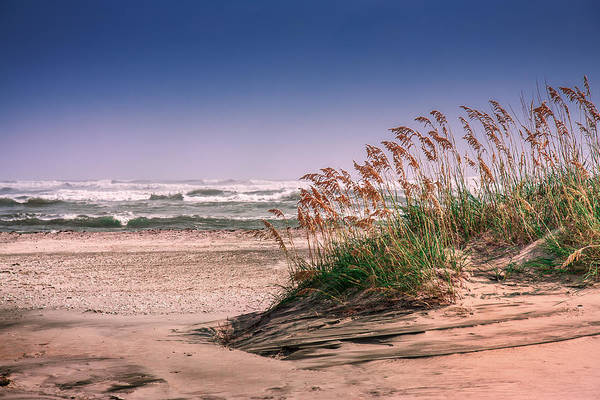 Photograph - Sea Oats On Pea Island by Mary Almond