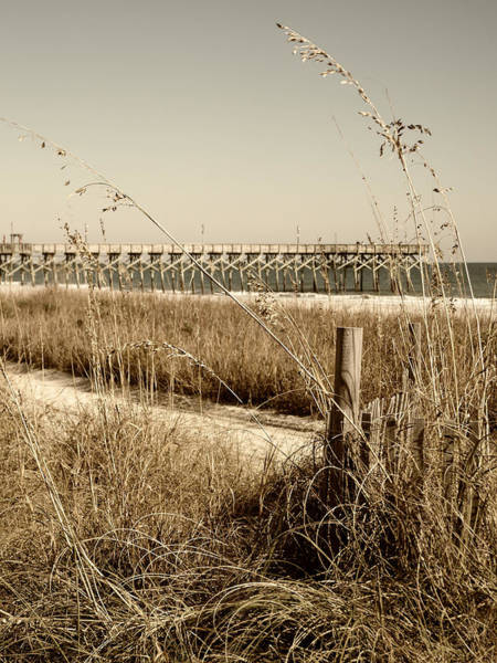 Photograph - Sea Oats On The Dunes In Sepia by MM Anderson