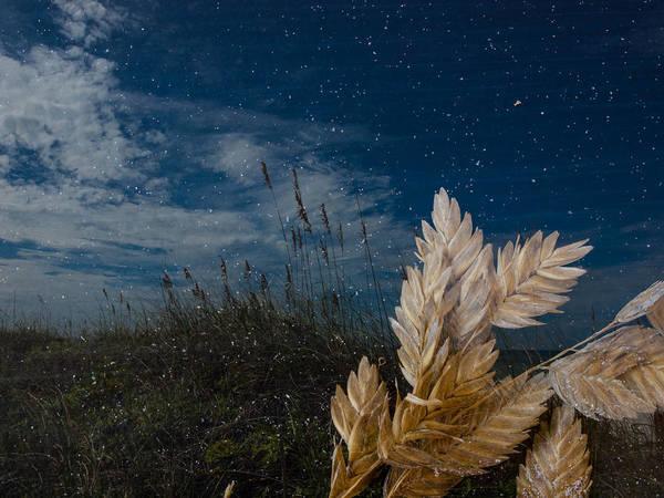 Photograph - Sea Oats by Randy Sylvia