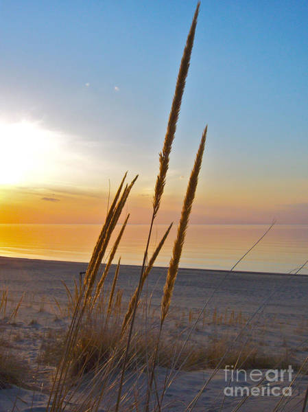 Photograph - Sea Oats Sunset by Pamela Clements