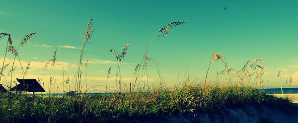 Photograph - Sea Oats Under The Morning Sun In Sarasota by Patricia Awapara