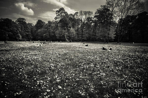 Photograph - Sea Of Dandelion - Bw by Hannes Cmarits
