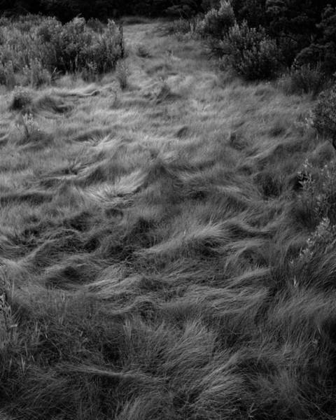 Photograph - Sea Of Grass by John Feiser