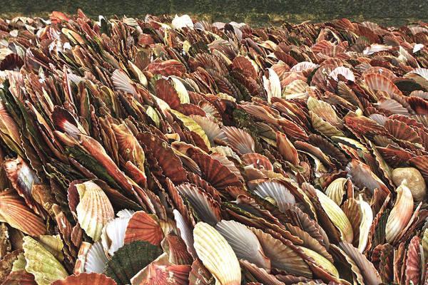 Photograph - Sea Of Shells by Aidan Moran