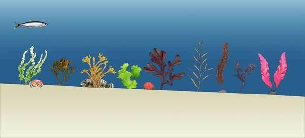 Kelp Photograph - Sea Plants by Mikkel Juul Jensen