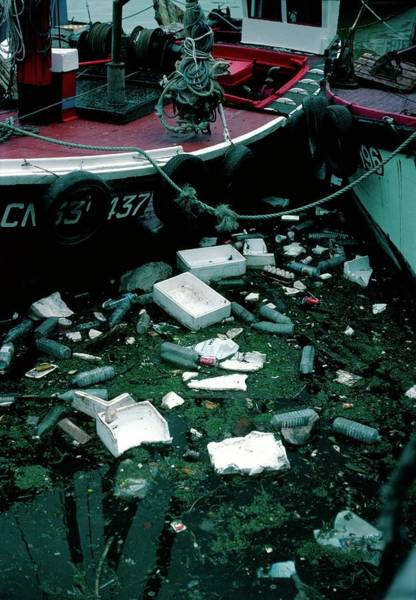 Litter Photograph - Sea Pollution In Harbour by James Stevenson/science Photo Library