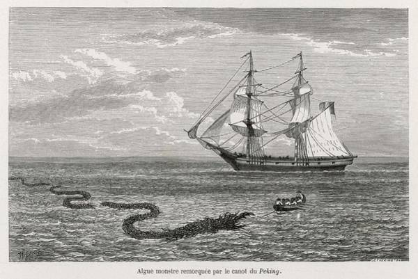 Weeds Drawing - Sea Serpent Look-alike Trailing by Mary Evans Picture Library