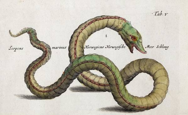 Engraving Photograph - Sea Serpent by Paul D Stewart