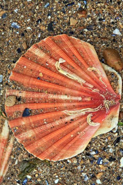 Photograph - Sea Shell  by Aidan Moran