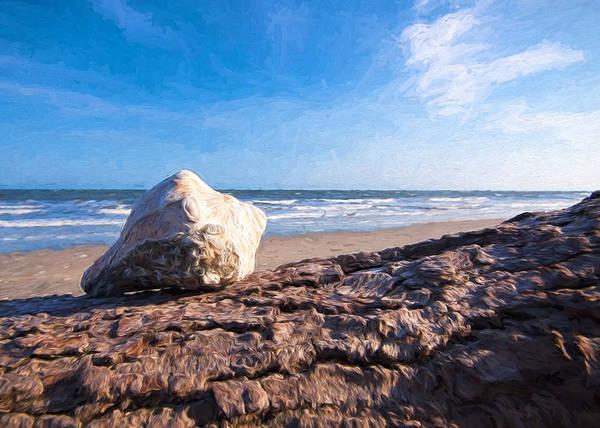 Shirleys Bay Photograph - Sea Shell On The Sea Shore - Botany Bay by Shirley Radabaugh