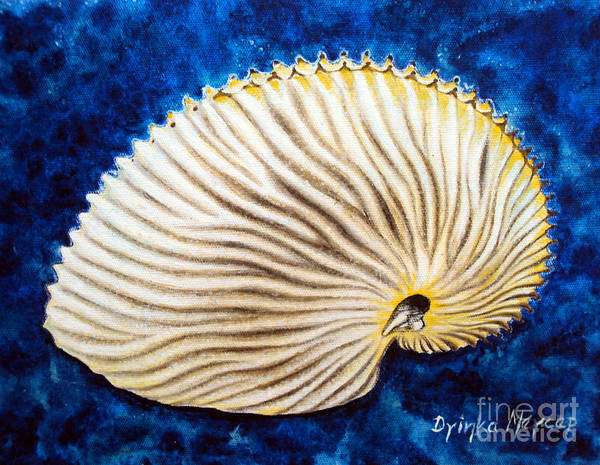 Painting - Sea Shell Original Oil On Canvas No.2. by Drinka Mercep