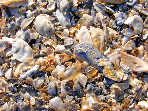 Photograph - Sea Shell Sand by Duane McCullough