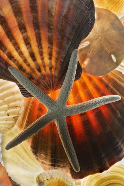 Photograph - Sea Shells by Bob Decker