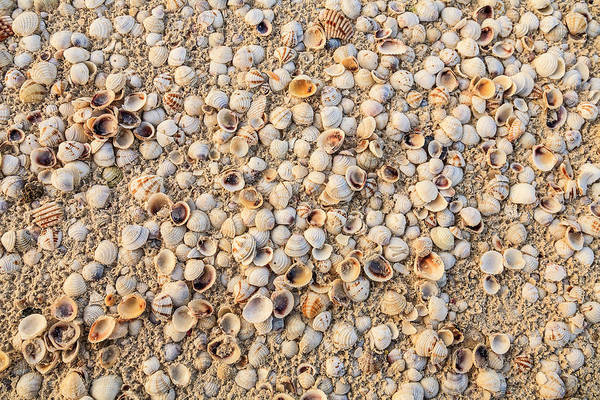 Quintana Roo Photograph - Sea Shells Concentrated On Beach by Stuart Westmorland