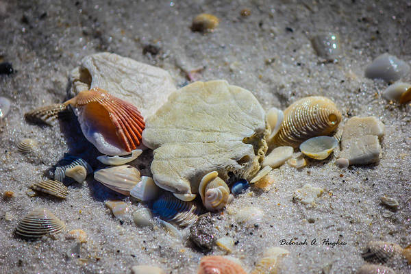 Photograph - Sea Shells by Deborah Hughes