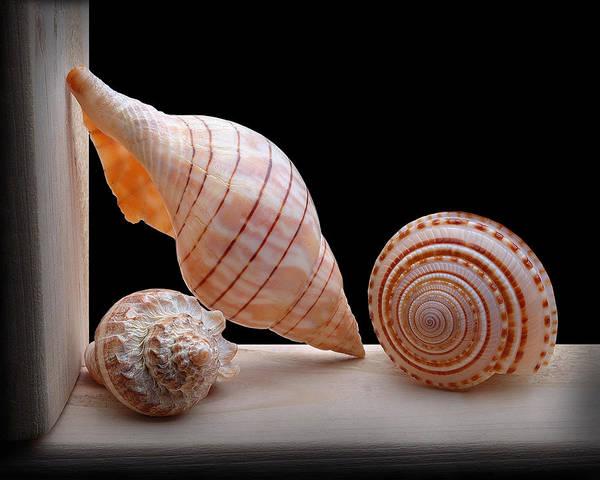 Wall Art - Photograph - Sea Shells by Krasimir Tolev