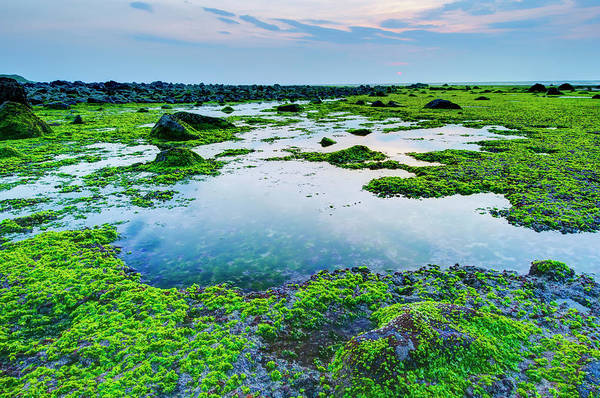 Covering Photograph - Sea Shore Covered By Green Plants by Lawren
