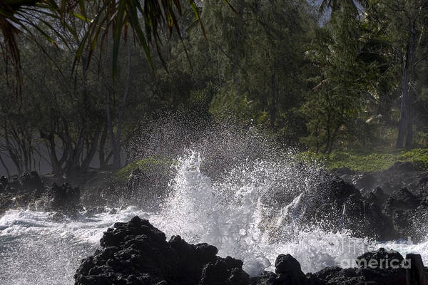 Photograph - Sea Spray by Ronald Lutz