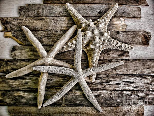 Three Seashells Photograph - Sea Stars by Colleen Kammerer