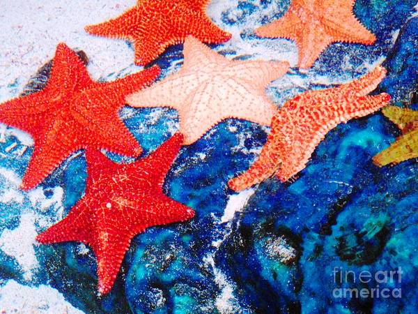 Photograph - Sea Stars by Cristina Stefan