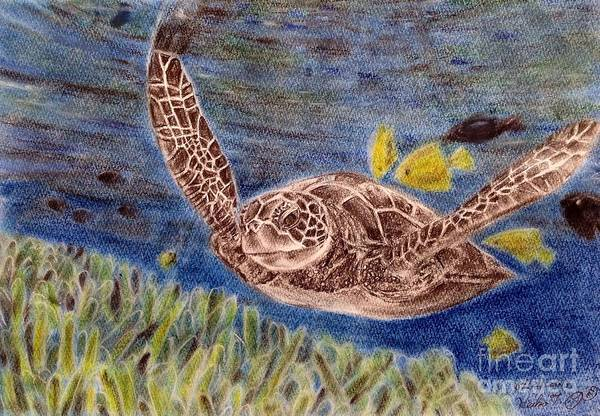Wall Art - Drawing - Sea Turtle by Keiko Olds