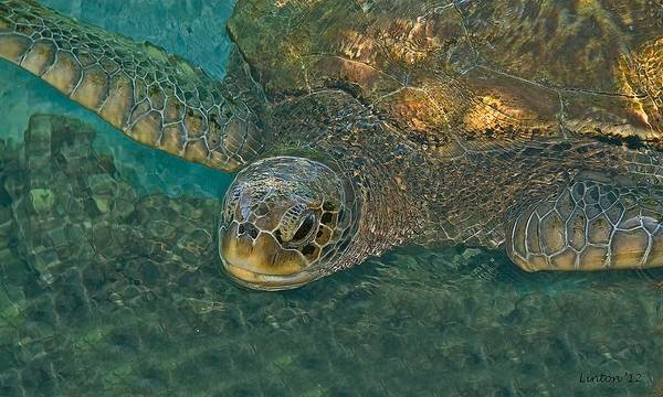 Photograph - Sea Turtle by Larry Linton