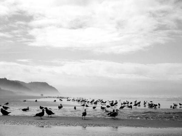 Photograph - Seabird Horizon by Tarey Potter