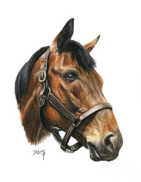 Wall Art - Painting - Seabiscuit by Pat DeLong